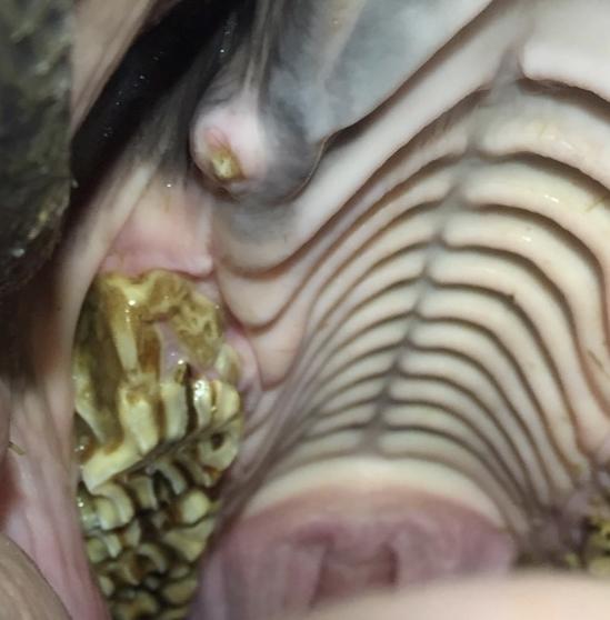 sporthorse-medical-diagnostic-centre_smdc_tandarts_dentistry-1