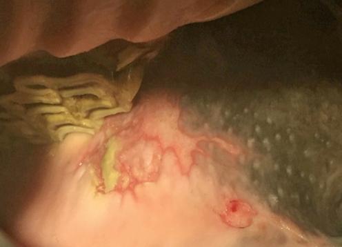sporthorse-medical-diagnostic-centre_smdc_tandarts_dentistry-3b