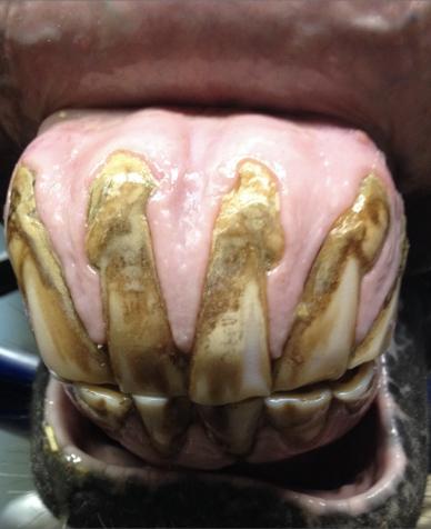 sporthorse-medical-diagnostic-centre_smdc_tandarts_dentistry-4a