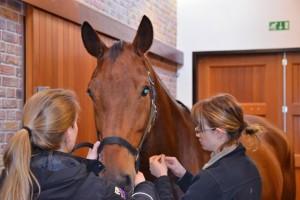 Injectie paard